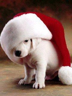 Картинка Рождественский щенок (Xmas Puppy) 240x320 для Нокиа