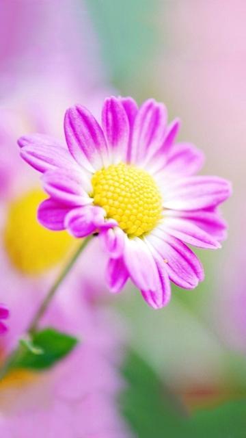 Картинки красивые природа 360на640