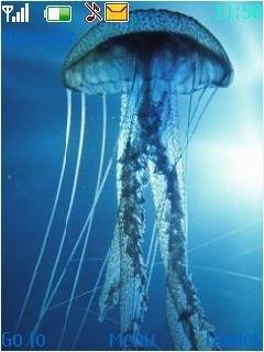 Тема медуза в море для телефона