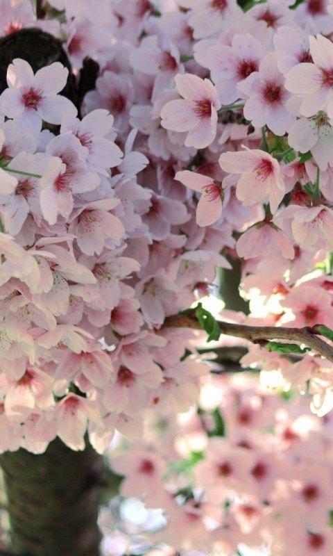 Картинки на телефон про весну