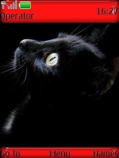 Тема черный кот для Нокиа
