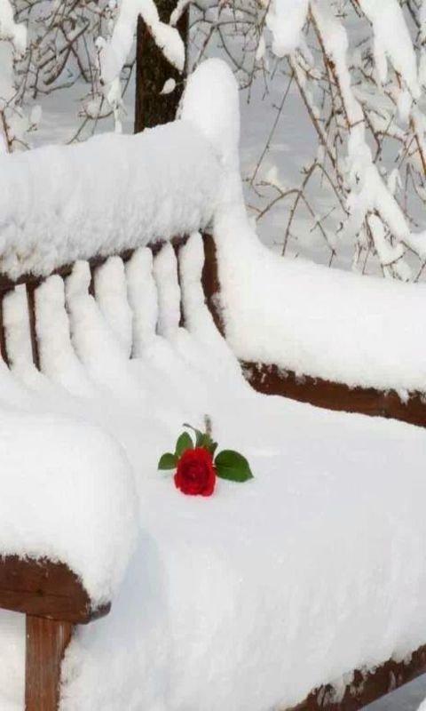 Картинка Gentle rose on snow 480x800
