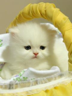 Картинка white kitten in yellow basket 240x320