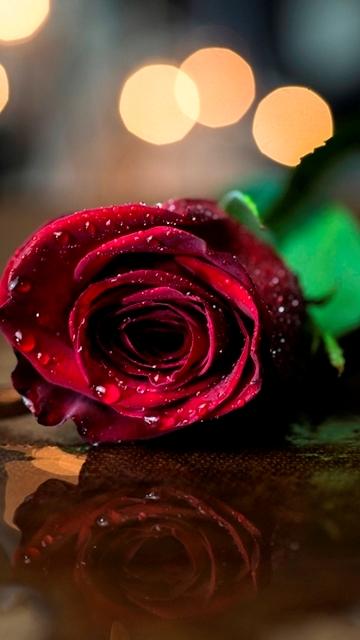 Картинка красная роза 360x640