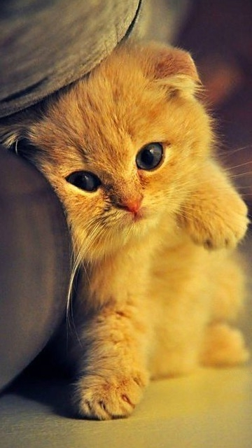 котята картинки на телефон